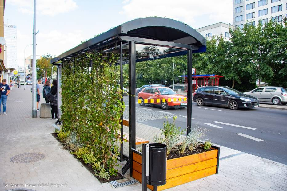 Przystanek autobusowy przy jezdni pokryty pnączami i zielenią