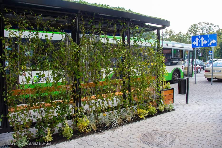 Przystanek autobusowy porośniety pnączami od tyłu. Na dachu wiaty przystankowej znajduje się soczysto zielony trawnik.